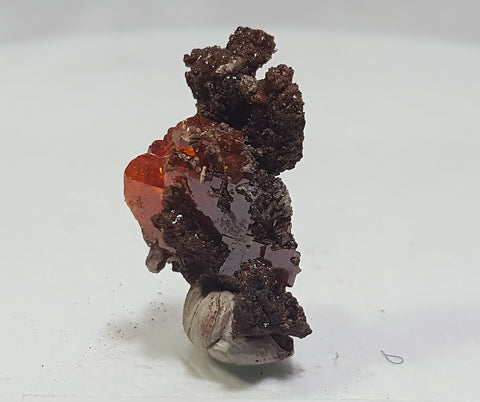 Wulfenite from Red Cloud Mine, Lapaz County Arizona. Stock #458sl
