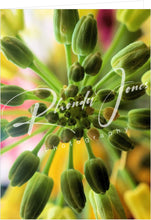 Load image into Gallery viewer, Flower Greeting Cards - Macro Photography - Pack of 5 Designs