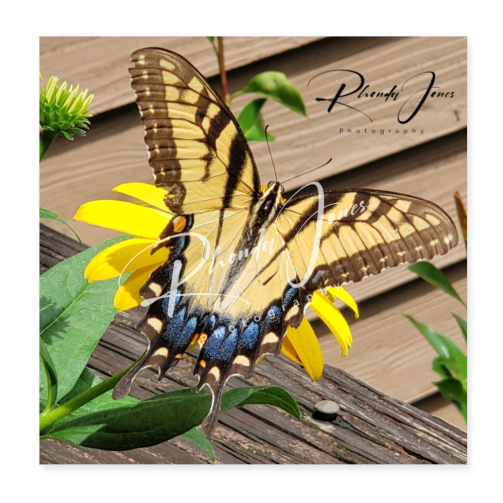 Butterfly Poster 8x8