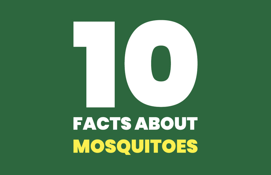 10 Interesting Facts About Mosquitoes