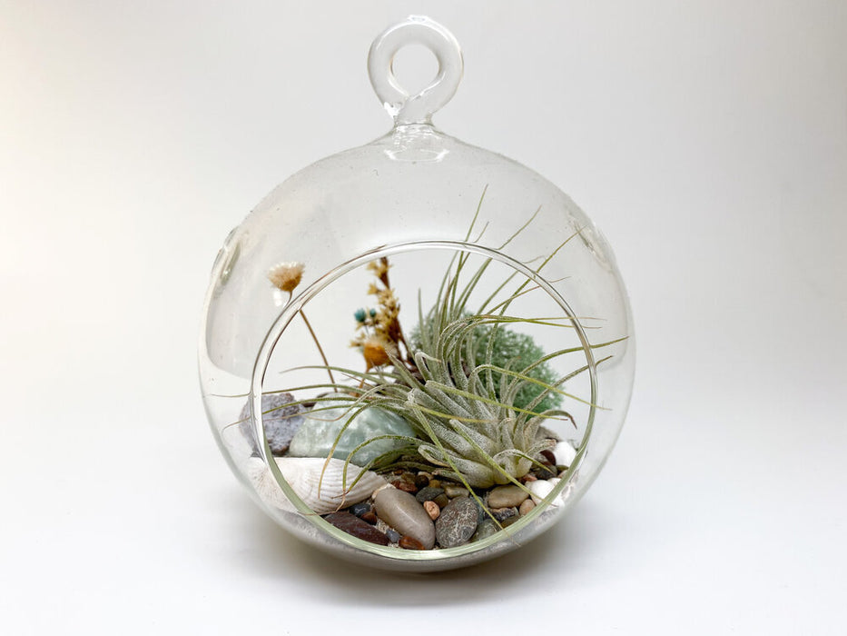 DIY Orb Forest Lake Theme Terrarium Kit with Air Plant