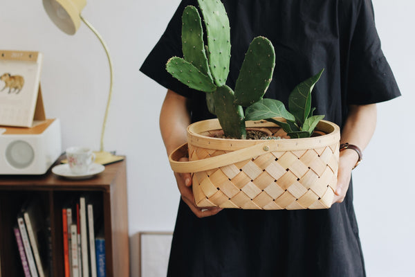 person holding a plant in a basket