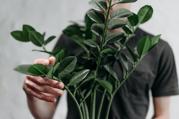 person holding leaves of plant