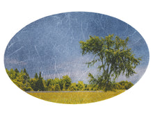 Load image into Gallery viewer, Sheltering Elm Tree