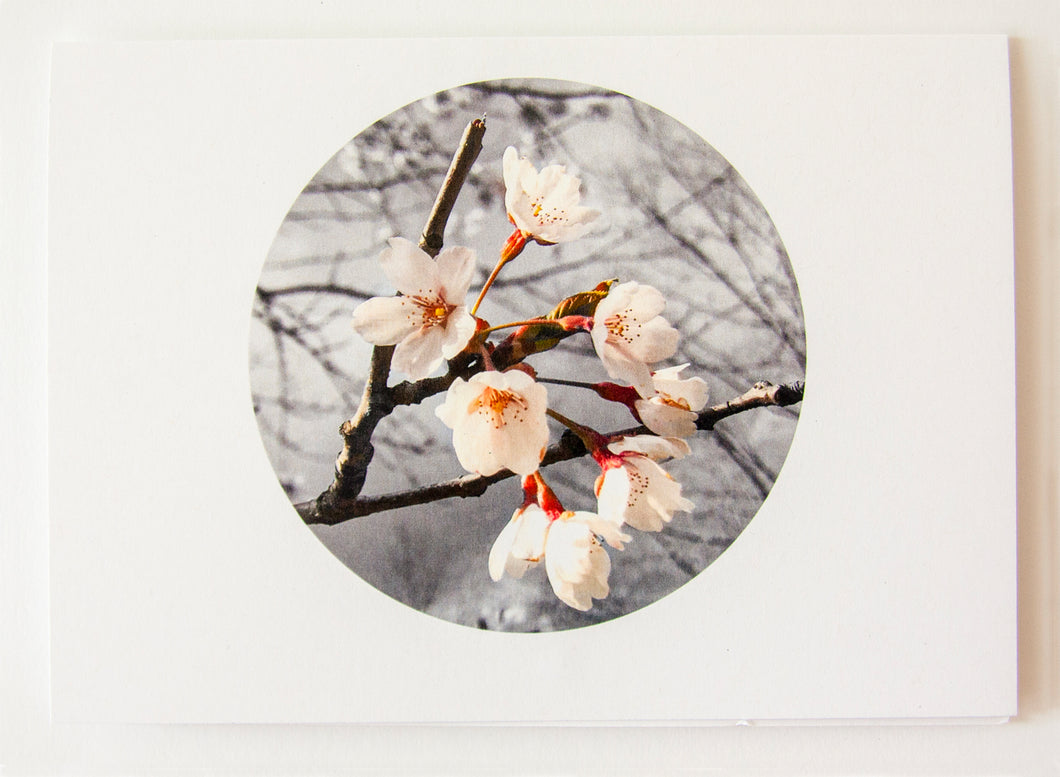 Greeting Card - Cherry Blossom