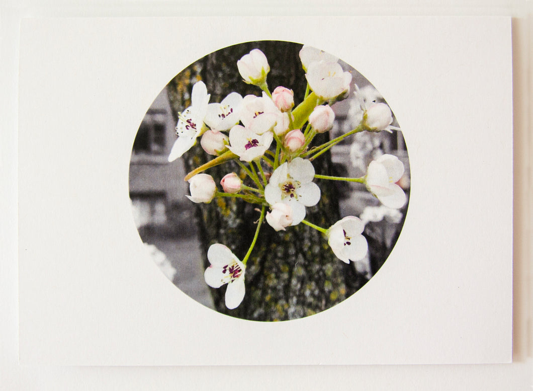 Greeting Card - Pear Blossoms