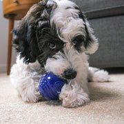 Nearly Indestructible Dog Toy Ball