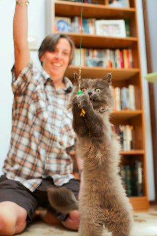 Tassel Teaser Cat Toy