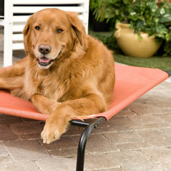 Let Sleeping Dogs Lie - Elevated Pet Bed