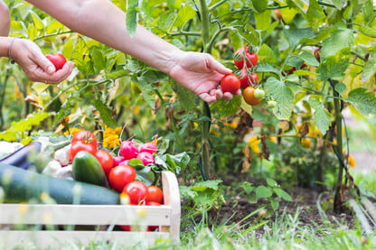 Growing Your Own Vegetables