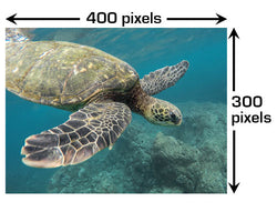 Image of a turtle showing width and height in pixels