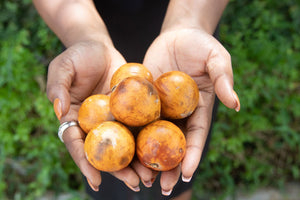 Oh So University: The African Star Apple