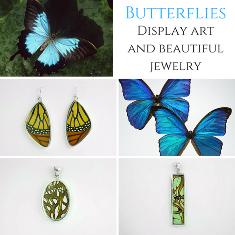 butterflies display jewelry astro gallery