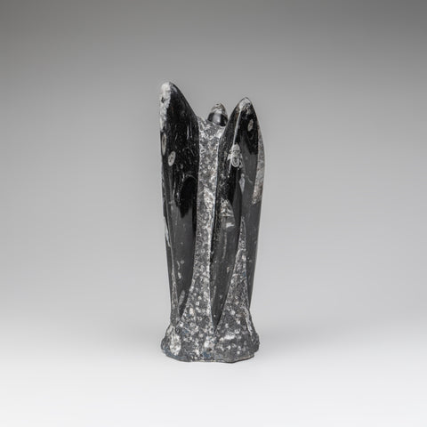 Genuine Polished Orthoceras Fossil Statue (4 lbs)