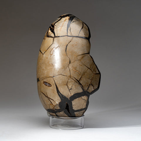 Septarian Druzy Egg from Madagascar (10.5 lbs)