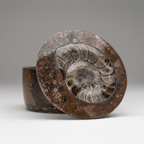 Ammonite and Orthoceras Fossil Round Box (1.4 lbs)