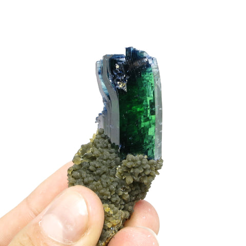 Vivianite on matrix with siderite From Huanuni mine, Huanuni, Dalence Province, Oruro Department, Bolivia
