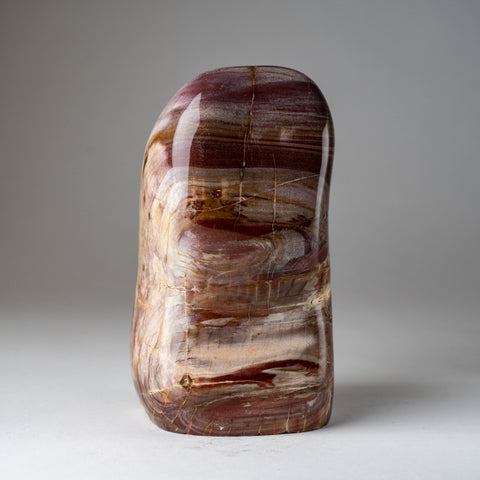 Polished Petrified Wood Freeform from Madagascar (9 lbs)