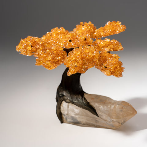 Medium Genuine Citrine Clustered Gemstone Trees on Clear Quartz Matrix (The Tree of Prosperity)