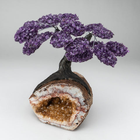 Custom - Amethyst Clustered Gemstone Tree on Citrine Geode Matrix (The Empowerment Tree)