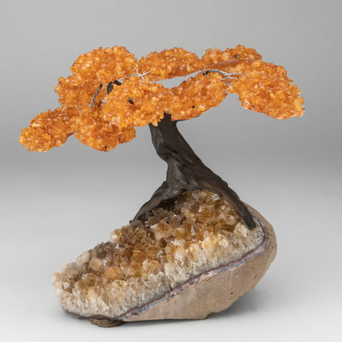 Citrine Clustered Gemstone Tree on Citrine Matrix (The Calming Tree)