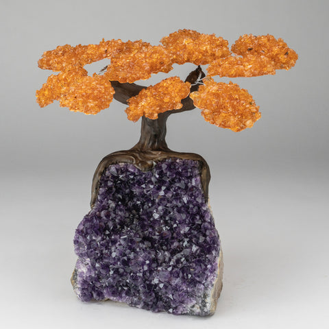 Citrine Clustered Gemstone Tree on Amethyst Matrix (The Money Tree)