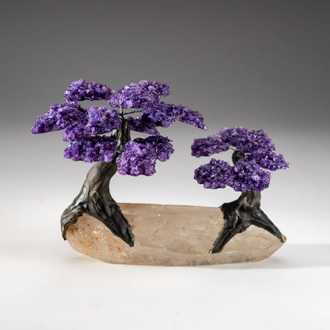 Two Genuine Amethyst Clustered Gemstone Trees on Clear Quartz Matrix (The Relaxation Tree)