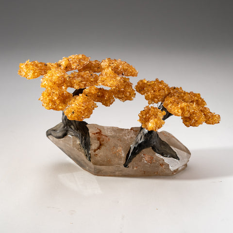 Two Genuine Citrine Clustered Gemstone Trees on Clear Quartz Matrix (The Tree of Prosperity)