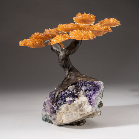 Custom - Citrine Clustered Gemstone Tree on Amethyst Matrix (The Money Tree)
