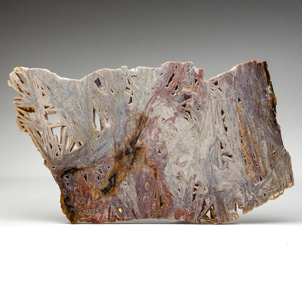 Rhyolite Slice From Brazil
