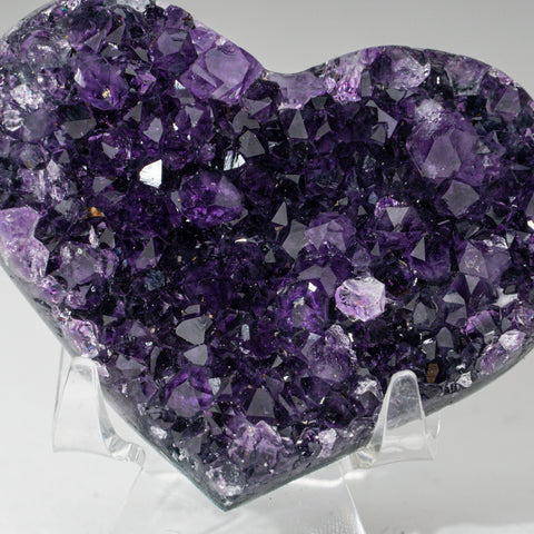 Calcified Ammonite Half From Madagascar (.8 lbs)