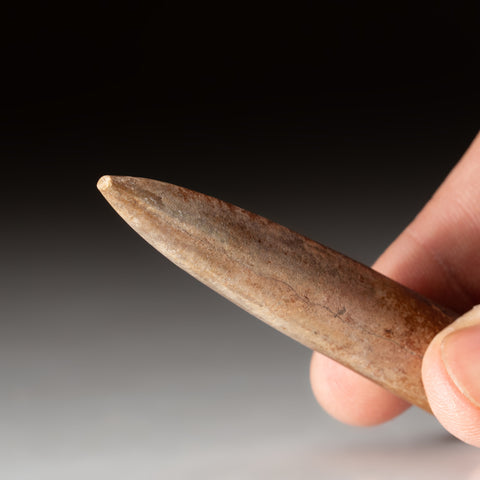 Genuine Belemnite (Internal Shell of s Cephalopod) Fossil (18.2 grams)