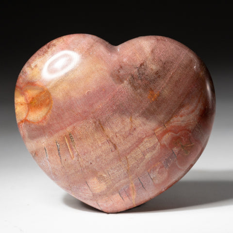 Petrified Wood Heart from Madagascar (272.3 grams)
