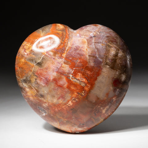 Petrified Wood Heart from Madagascar (1.8 lbs)