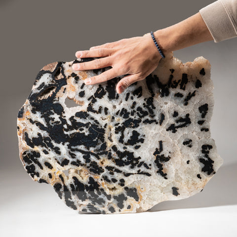 Polished Dendritic Agate Slice from Brazil (14.6 lbs)