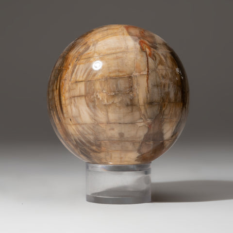 "Polished Petrified Wood Sphere from Madagascar (3"", 2 lbs)"