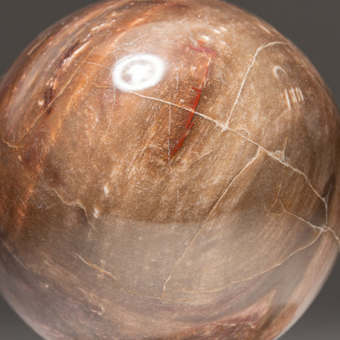 "Polished Petrified Wood Sphere from Madagascar (4"", 3 lbs)"