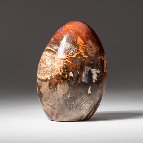 Polished Petrified Wood Freeform from Madagascar (1.6 lbs)