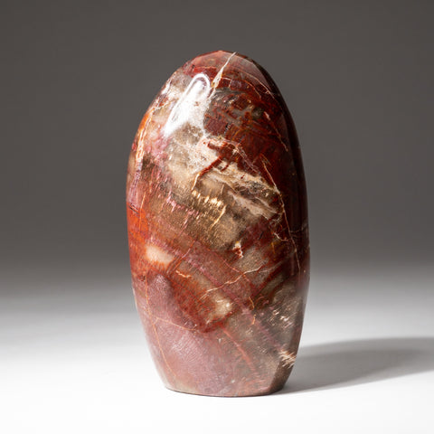 Polished Petrified Wood Freeform from Madagascar (1.8 lbs)
