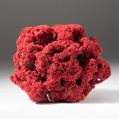 Natural  Red Pipe Organ Coral (283 grams)
