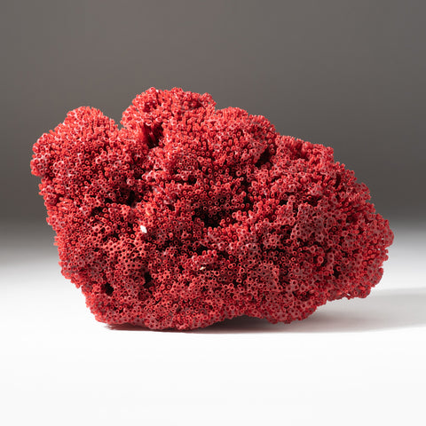 Natural  Red Pipe Organ Coral (.8 lbs)