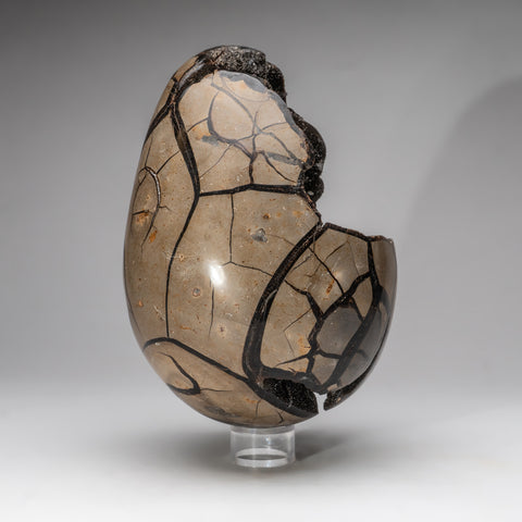 Septarian Druzy Egg from Madagascar (14.5 lbs)