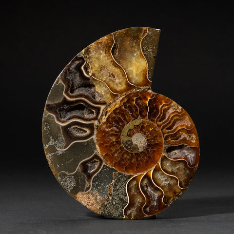 Calcified Ammonite Halve From Madagascar