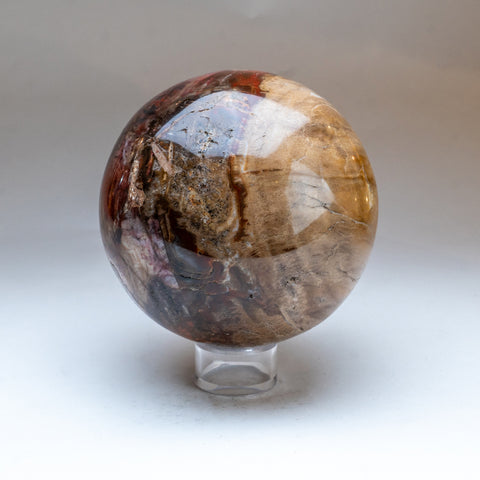 "Polished Petrified Wood Sphere from Madagascar (6"", 7 lbs)"
