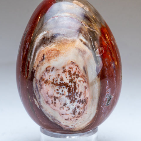 Polished Petrified Wood Egg from Madagascar (1.5 lbs)