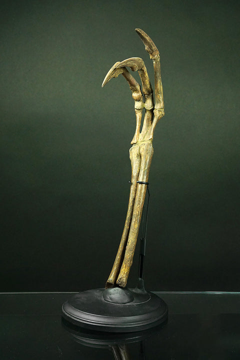 Allosaurus hand and Lower Arm - Astro Gallery