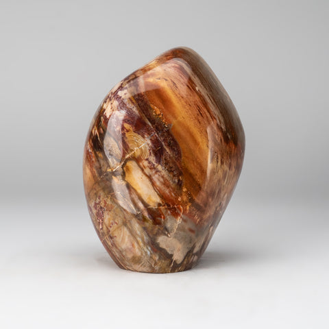 Polished Petrified Wood Freeform from Madagascar (8.2 lbs)