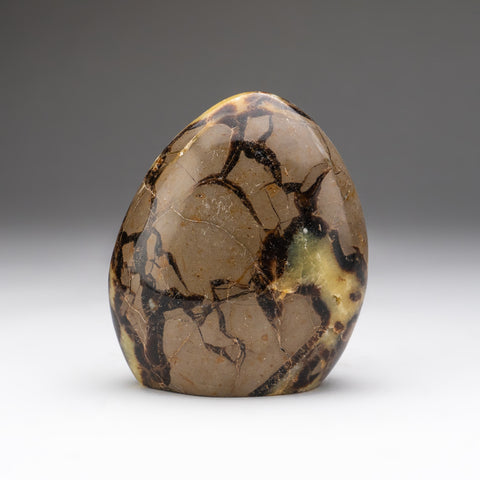Polished Septarian Freeform from Madagascar (2 lbs)