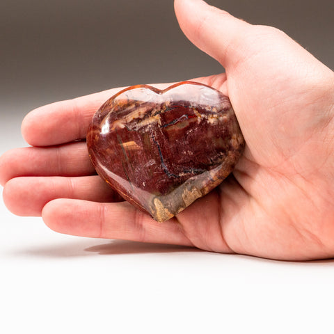 Petrified Wood Heart from Madagascar (191.2 grams)