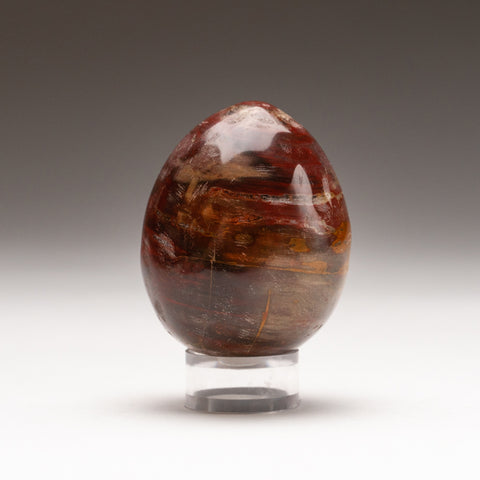 Polished Petrified Wood Egg from Madagascar (171.7 grams)